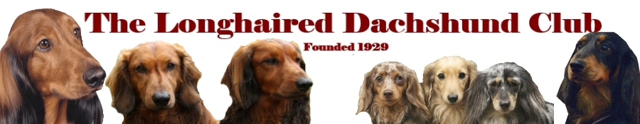 Dachshund clubs in uk